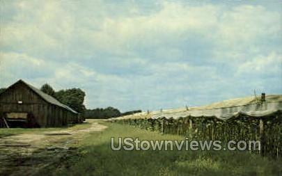 Conn. River Valley Tobacco Farm - Misc, Connecticut CT Postcard