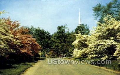 Dogwood Trees - Misc, Connecticut CT Postcard