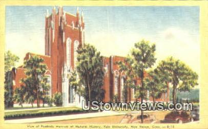 Peabody Muesum, Yale University - New Haven, Connecticut CT Postcard