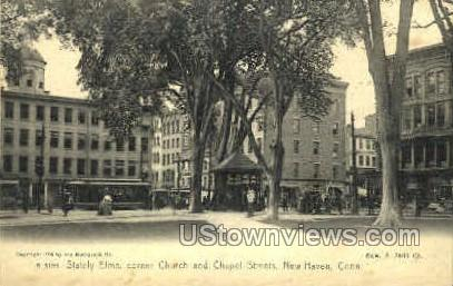 Stately Elms - New Haven, Connecticut CT Postcard