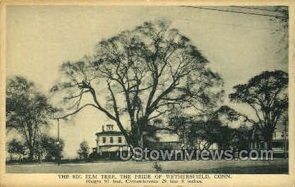 Big Elm Tree - Wethersfield, Connecticut CT Postcard