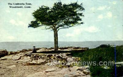 Umbrella Tree - Woodmont, Connecticut CT Postcard