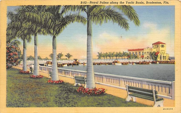 Royal Palms along the Yacht Basin  Bradenton, Florida Postcard