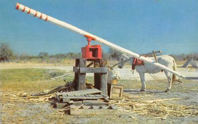 The Old Sugar Mill Bowling Green, Florida Postcard