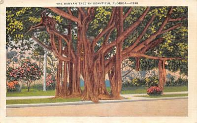 The Banyan Tree in Beautiful FL, USA Banana Trees, Florida Postcard