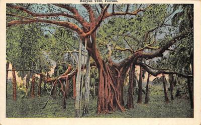 Banyan Tree, Florida, USA Postcard