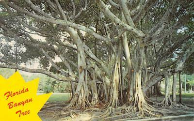 Florida Banyan Tree, USA Postcard