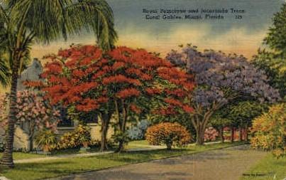 Poinciana and Jacaranda Trees - Coral Gables, Florida FL Postcard