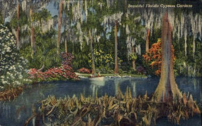 Forest - Cypress Gardens, Florida FL Postcard
