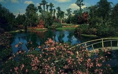 Cypress Gardens - Florida FL Postcard