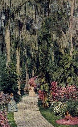 Azalea Time - Cypress Gardens, Florida FL Postcard