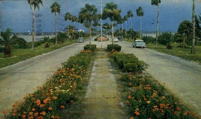 Flowerlined Causeway - Clearwater, Florida FL Postcard