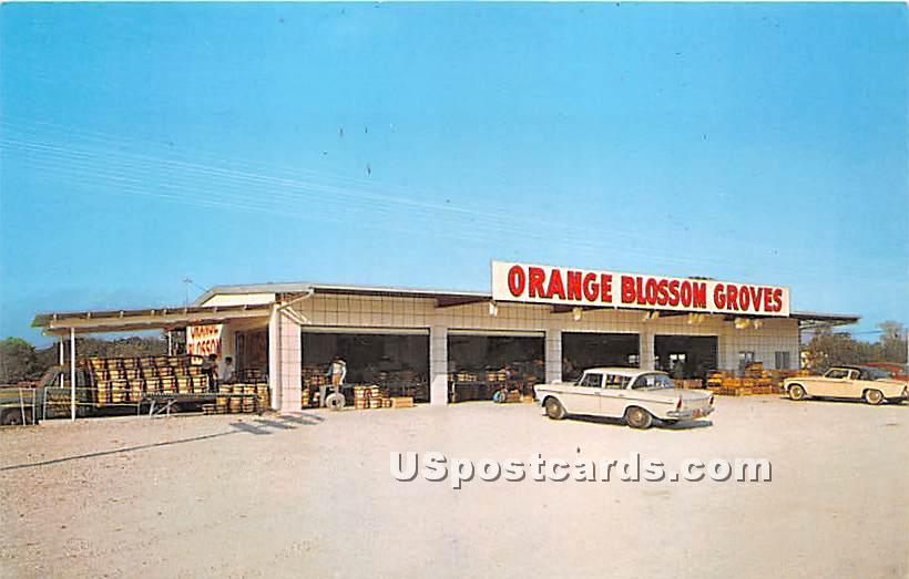 Orange Blossom Groves - Clearwater, Florida FL Postcard