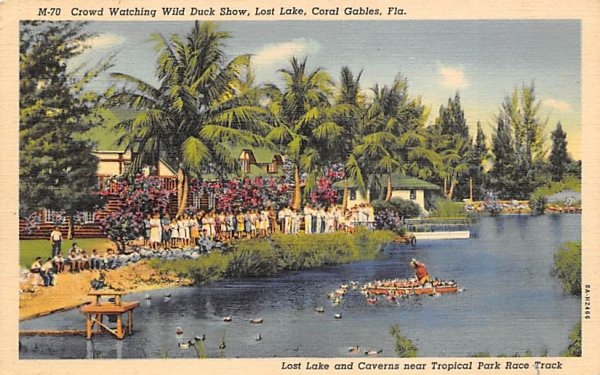 Crowd Watching Wild Duck Show Coral Gables, Florida Postcard