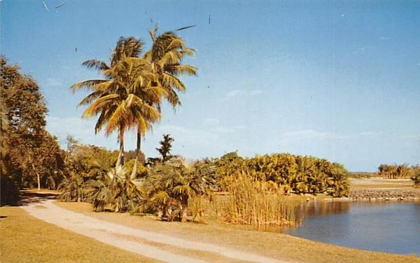 Fairchild Tropical Garden Coral Gables, Florida Postcard