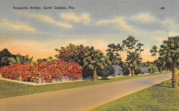 Poinsetta Hedge Coral Gables, Florida Postcard