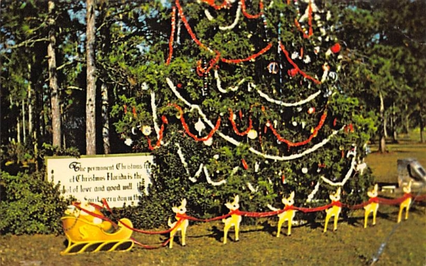 The Permanent Christmas Tree Florida Postcard