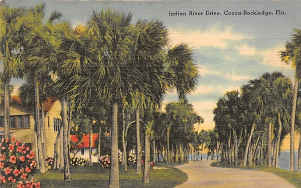 Indian River Drive Cocoa Rockledge, Florida Postcard