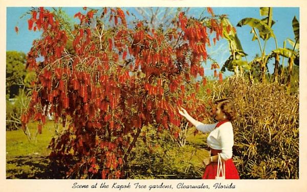 Scene at the Kapok Tree gardens Clearwater, Florida Postcard