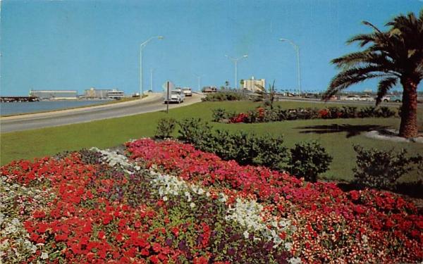 Clearwater Beach, FL, USA Florida Postcard
