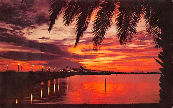 One of Florida's Most Spectacular Sights  Postcard