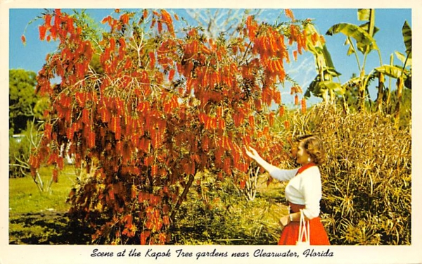Scene at the Kapok Tree gardens, Near Clearwater Cleawater, Florida Postcard