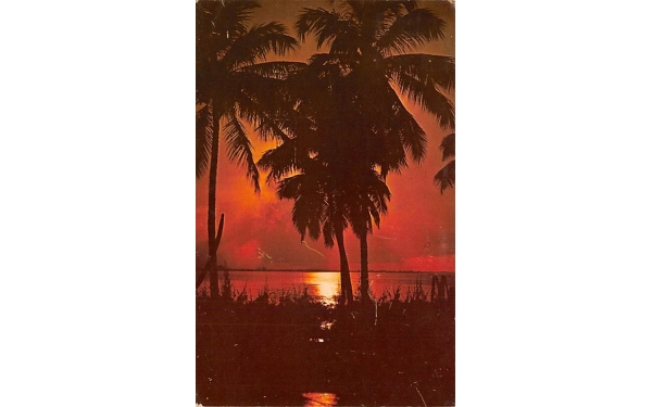 Coconut Palms Silhouetted Sun in FL, USA Coconut Palm Trees, Florida Postcard