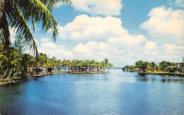 Along Florida's Bayous and Rivers, USA Postcard