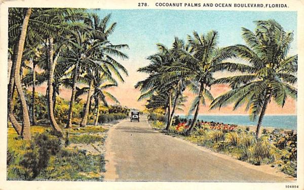 Cocoanut Palms and Ocean Boulevard Coconut Palm Trees, Florida Postcard