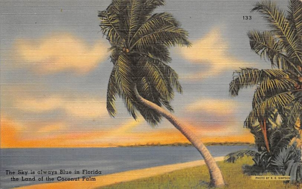 The Sky is always Blue in Florida, USA Postcard