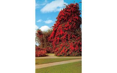 Florida's beautiful Cypress Gardens Postcard