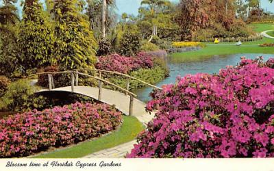 Blossom time at Florida's Cypress Gardens Postcard
