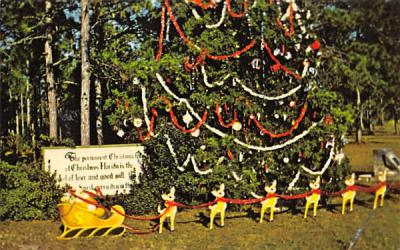 The Permanent Christmas Tree Florida Postcard