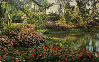 A picture of floral beauty Cypress Gardens, Florida Postcard