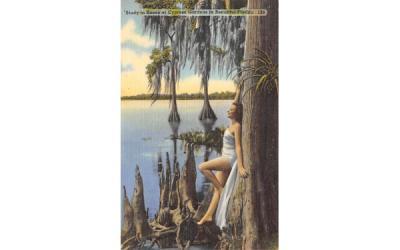 Knees at Cypress Gardens in Beautiful Florida, USA Postcard