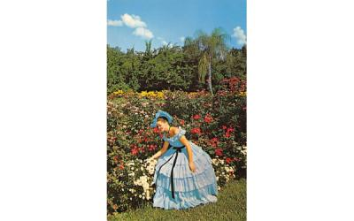 background of multicolored flowers Cypress Gardens, Florida Postcard