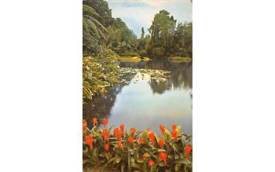 A Quiet Scene of Exotic tropical beauty  Cypress Gardens, Florida Postcard