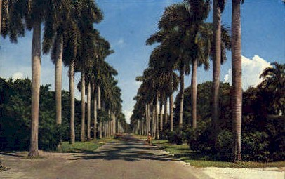 Avenue - Delray Beach, Florida FL Postcard