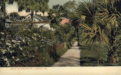 Palmetto Street - Daytona Beach, Florida FL Postcard