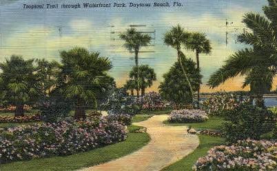 Tropical Trail - Daytona Beach, Florida FL Postcard