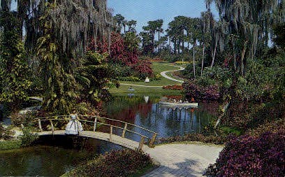 Tropical Vegetation - Cypress Gardens, Florida FL Postcard