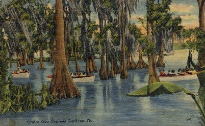 Cruise - Cypress Gardens, Florida FL Postcard