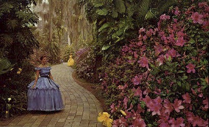Flowers - Cypress Gardens, Florida FL Postcard