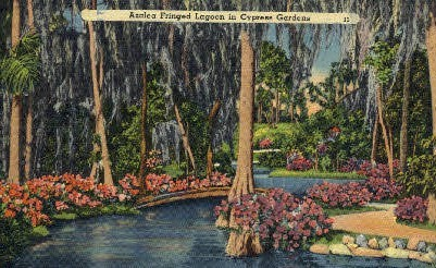 Azalea - Cypress Gardens, Florida FL Postcard