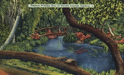Wishing Tree - Cypress Gardens, Florida FL Postcard