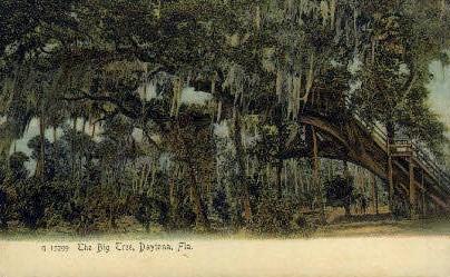 Big Tree - Daytona Beach, Florida FL Postcard