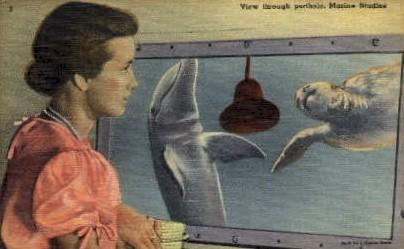 Marine Studios - Daytona Beach, Florida FL Postcard