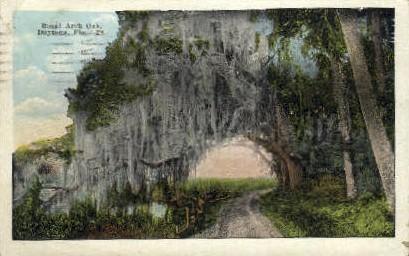 Royal Arch Oak - Daytona Beach, Florida FL Postcard