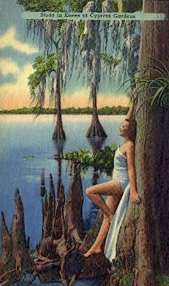 Study in Knees - Cypress Gardens, Florida FL Postcard