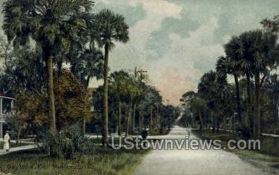 Palmetto Street - Daytona, Florida FL Postcard